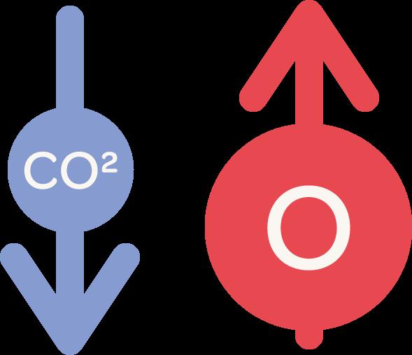 illustration of carbon dioxide levels decreasing, and oxygen levels increasing